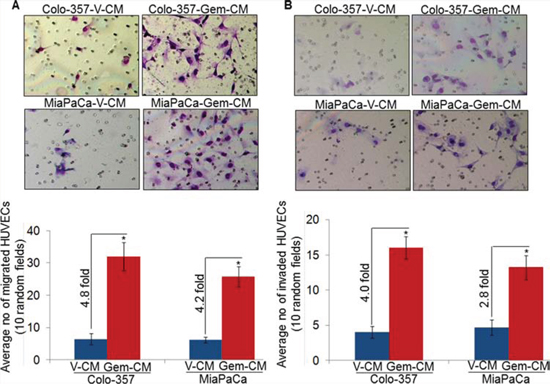 Conditioned media from gemcitabine-treated pancreatic cancer cells promotes motility and invasion of endothelial cells.