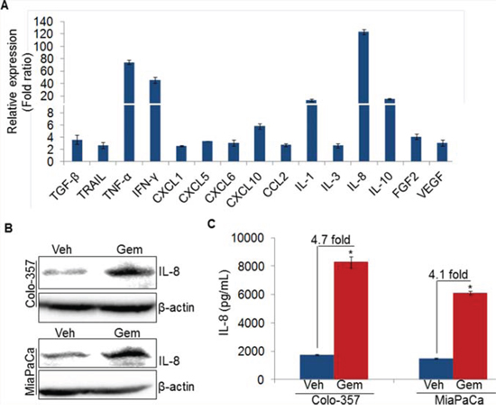 Gemcitabine induces IL-8 expression in pancreatic cancer cells.