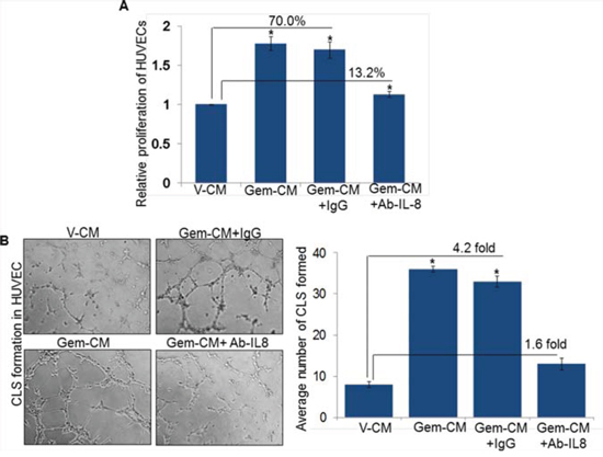 Neutralization of IL-8 abolishes Gem-CM-induced HUVEC proliferation and CLS formation.
