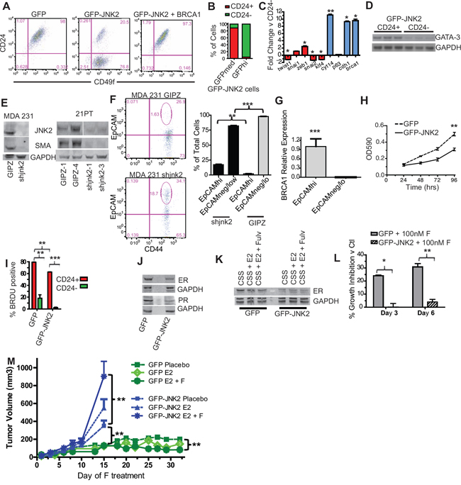 JNK2 increases putative tumor initiating cells and inhibits ER expression in p53ko mouse and mutant p53-expressing human cells.