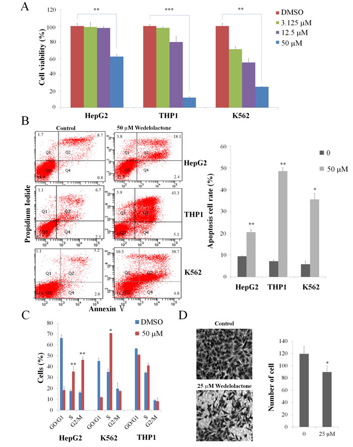 Wedelolactone inhibits PRC2-dependent cancer cells.