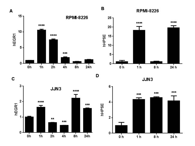 FGF23 regulates MM gene expression.