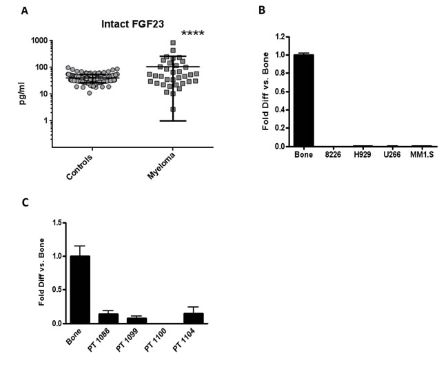 Serum intact FGF23 was higher in MM patients compared to controls, while MM cells made little FGF23 mRNA.