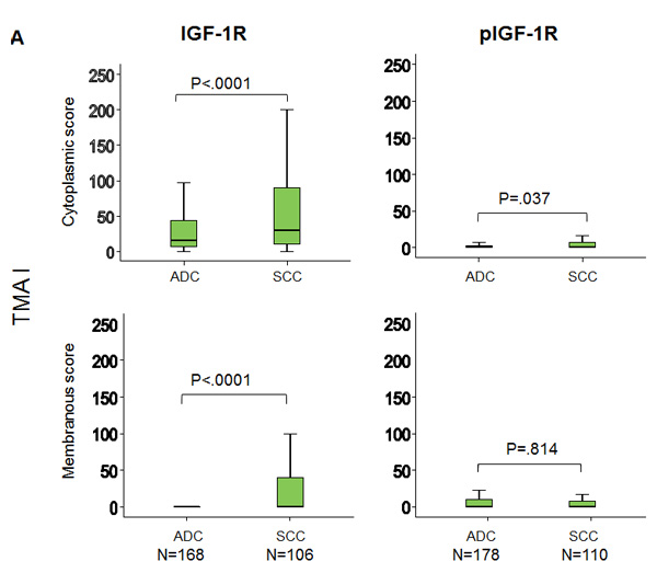 Increased expression of IGF-1R and phospho-IGF-1R in SCC compared to ADC.