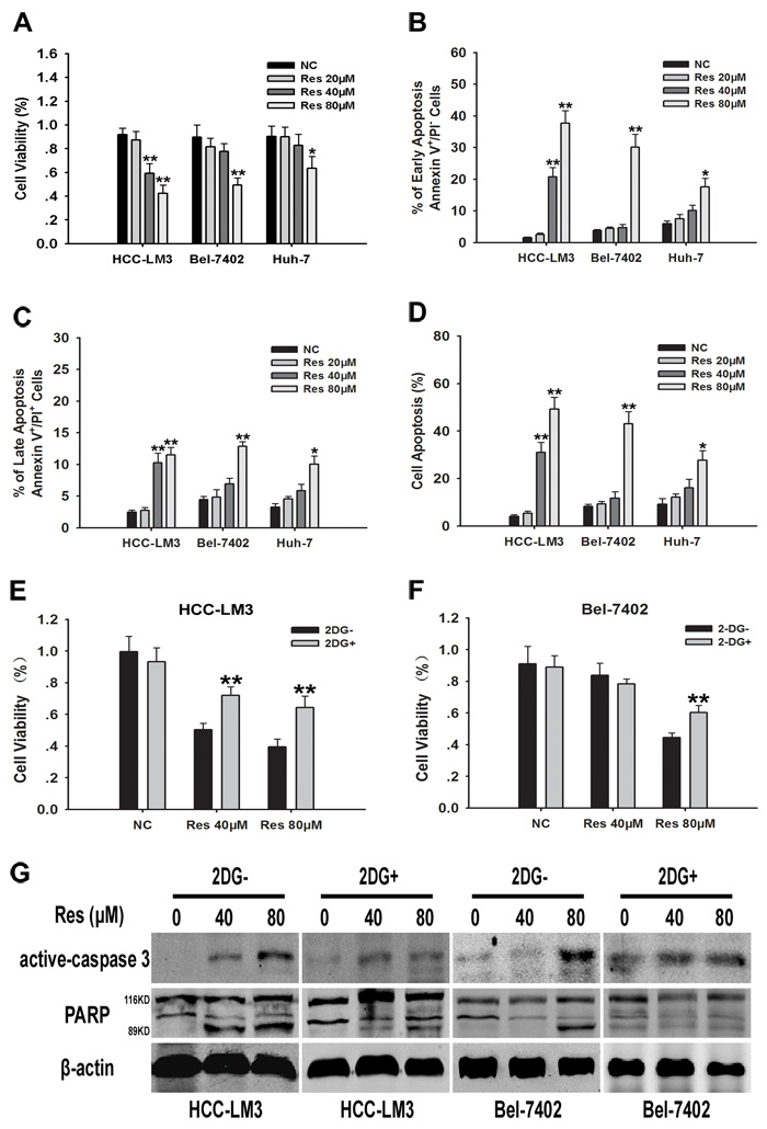Resveratrol inhibits cell proliferation partly through inhibiton of glycolysis in aerobic glycolytic HCC cells.