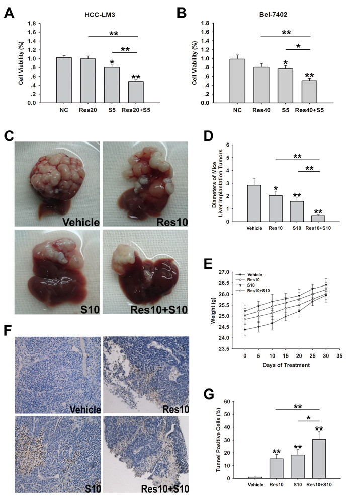 Resveratrol increases sorafenib induced cell growth inhibition in both sorafenib-resistant HCC cells and nude mice bearing liver orthotopic tumor.