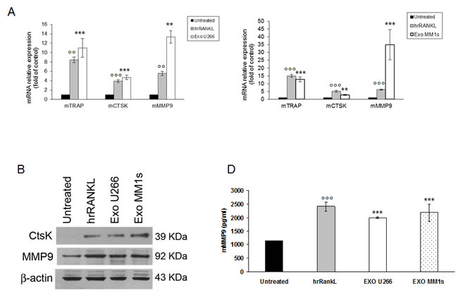 Multiple myeloma cell-derived exosomes increase expression of osteoclasts specific markers .
