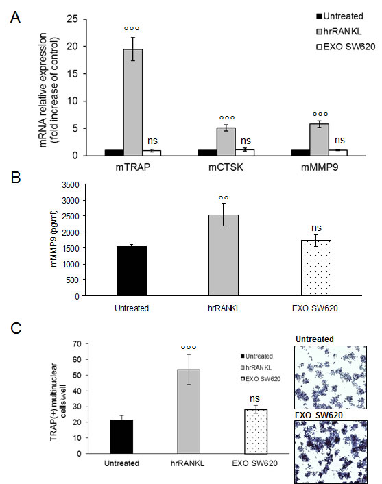 Colorectal cancer cell-derived exosomes not affect osteoclastogenesis of RAW 264.7 precursors.
