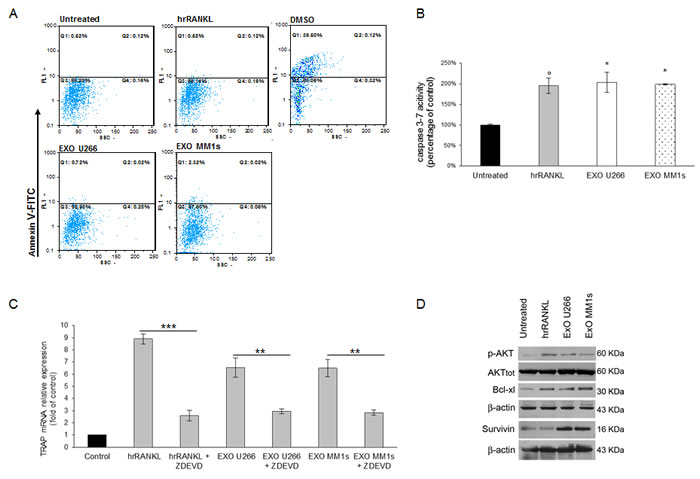 Exosomes released by multiple myeloma cells support osteoclast precursors survival and inhibit apoptosis.