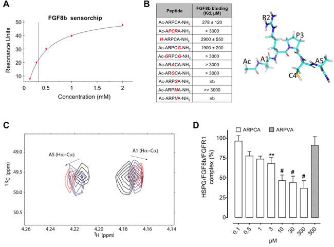 ARPCA binds and antagonizes FGF8b.