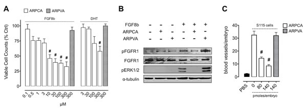 ARPCA inhibits the proliferation and angiogenic potential of FGF8b-dependent tumor cells.