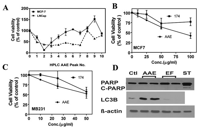 Ericifolin is not the active component in AAE against breast cancer.