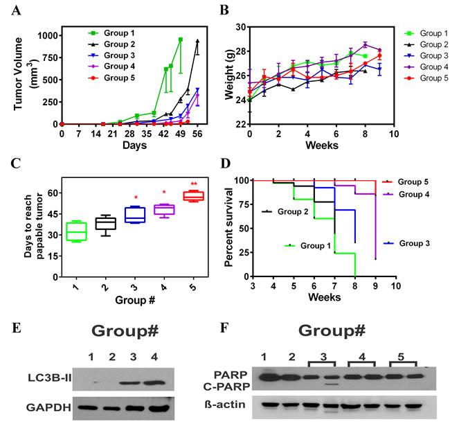 AAE inhibits MDA-MB231 tumors