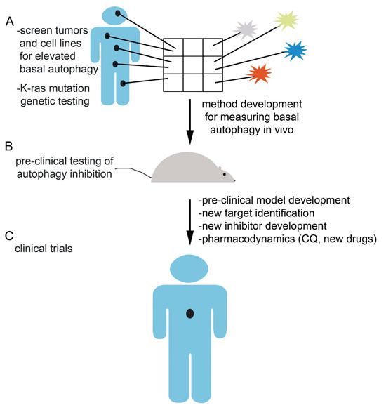 Future directions and challenges in autophagy inhibition.