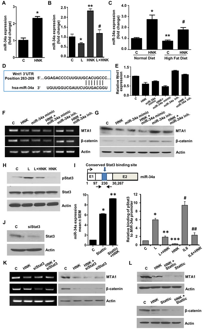 Involvement of miR-34a in HNK-mediated inhibition of MTA1-β-catenin axis and role of Stat3 inhibition in HNK-mediated miR34a upregulation and MTA1-β-catenin axis inhibition.
