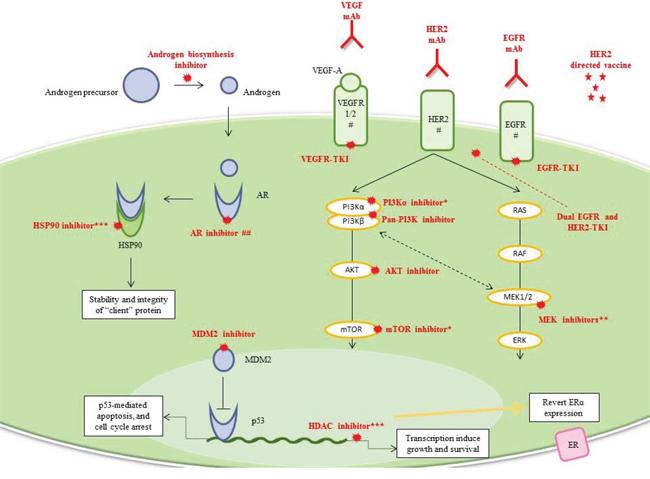Luminal/apocrine TNBC and HER2-enriched TNBC.
