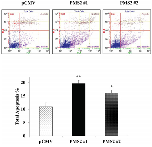 PMS2 expression upregulates apoptosis.