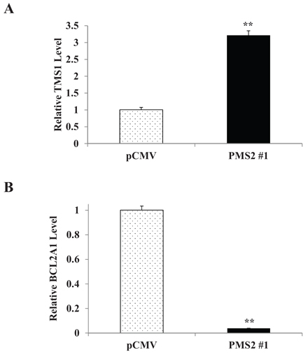 PMS2 induces TMS1 and inhibits BCL2A1 expression in DU145 cells.