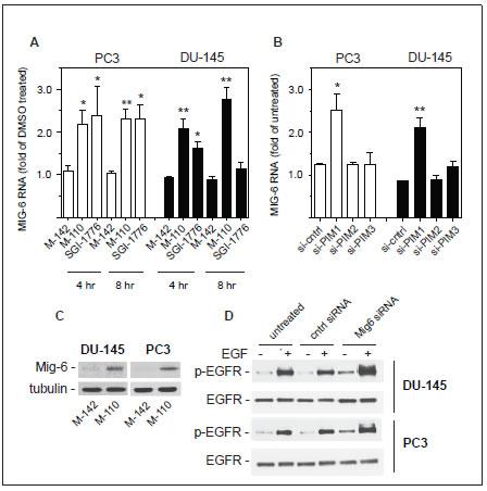 Regulation of MIG6 gene expression.