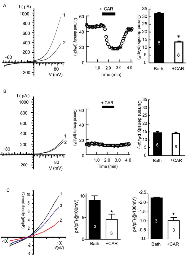 Carvacrol (CAR) blocked TRPM7 currents in HEK293 cells overexpressing TRPM7 and TRPM7-like currents in U87 cells.