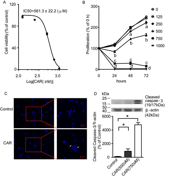 Carvacrol reduced U87 cell viability and proliferation, and induced apoptosis.