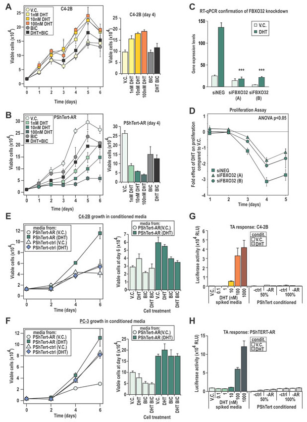 C4-2B and PShTert-AR cells have different proliferative responses to DHT.