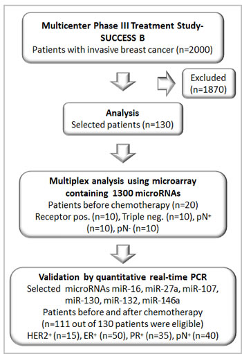 Consort diagram showing the number of patients analyzed from the multicenter study (SUCCESS B).
