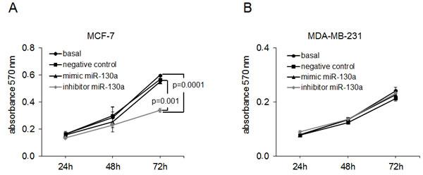 MiR-130a affects proliferation of MCF-7 cells.