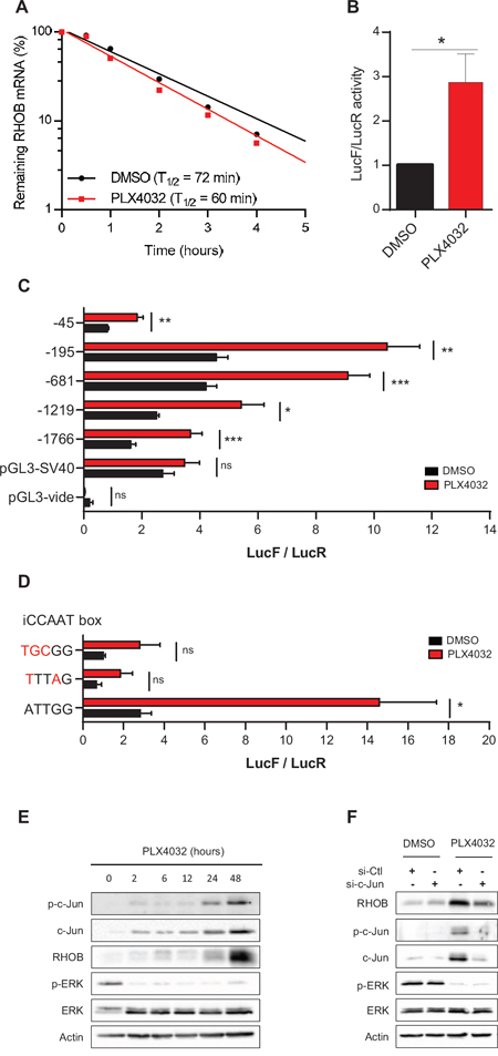 RHOB is induced by PLX4032 through transcriptional activation in an iCCAAT and c-Jun dependent pathway.