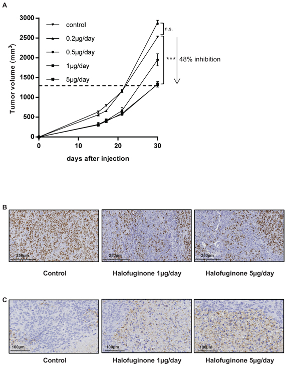Halofuginone inhibits osteosarcoma primary tumor growth.
