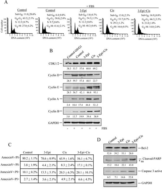 3-Epi enhances cisplatin effect in Pit-1-overexpressed breast cancer cells.