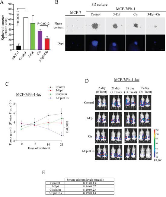 3-Epi potentiates cisplatin to reduced tumor growth.