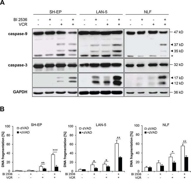 BI 2536 and VCR cooperate to induce caspase-dependent apoptosis.