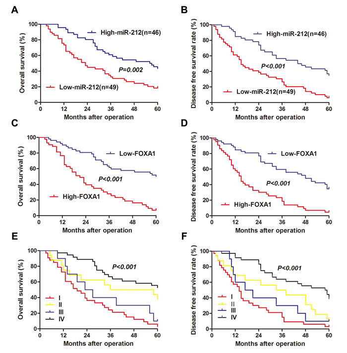 The prognostic value of miR-212 and FOXA1 for HCC patients assessed by Kaplen-Merier analysis.