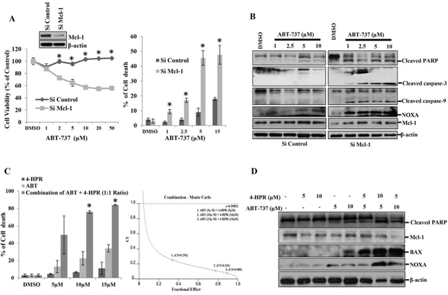 Mcl-1 plays a major role in the carcinogenesis of oral squamous cell carcinomas.