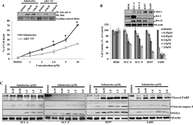 Sabutoclax selectively sensitizes OSCC cells to cell death.
