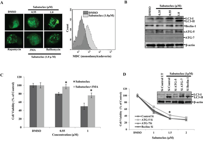 Mcl-1 inhibitor Sabutoclax induces autophagy in OSCC cells.
