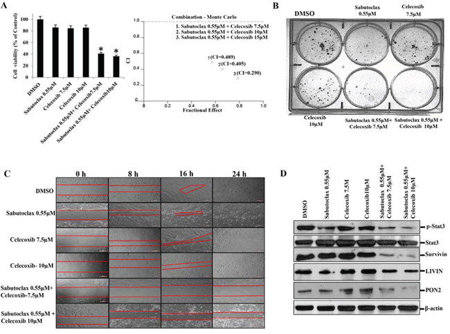 The combination regimen of Sabutoclax and Celecoxib inhibits the growth of OSCC.