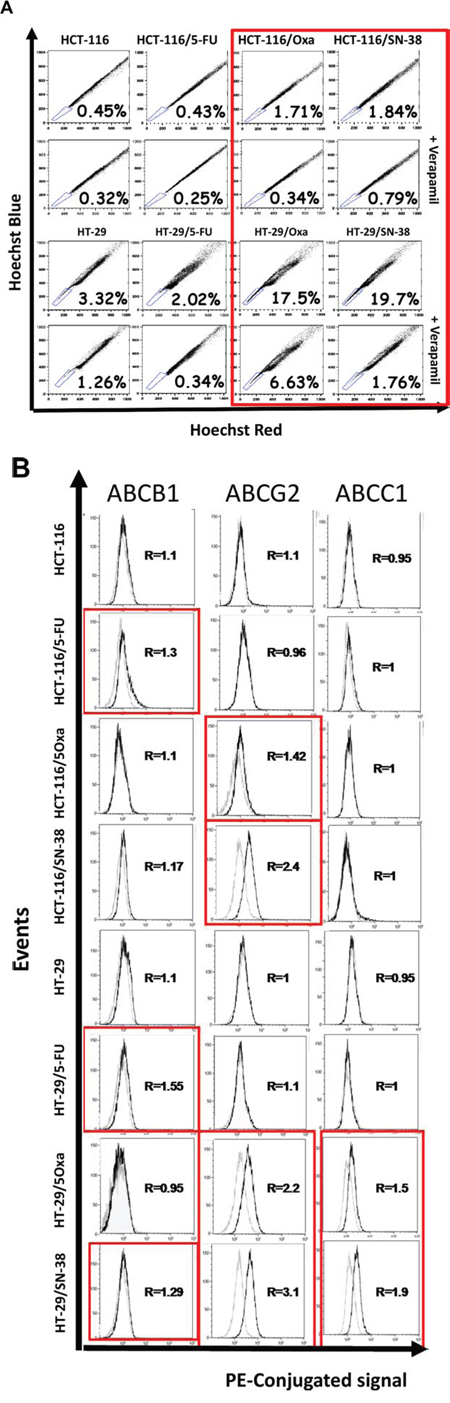 A. Accumulation of Hoechst 33342 as determined by flow cytometry analysis