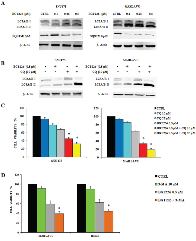 Modulation of autophagy by BGT226 in hypoxia condition.