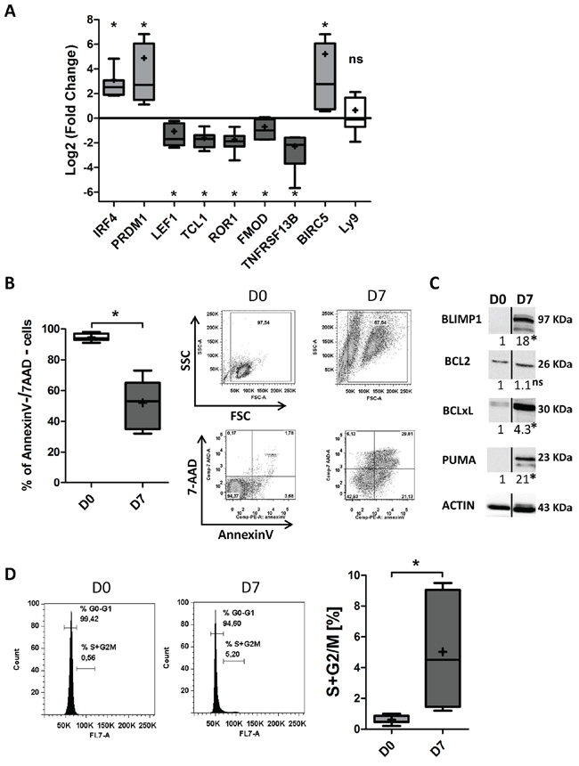 CpG/CD40L/c-derived CLL B-cells differentiation induces downregulation of the expression of CLL-pathogenesis-associated factors, decreased survival and a low proliferation rate.