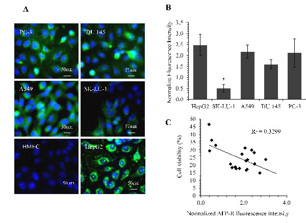 Quantification of AFP-receptor levels using IF staining and its correlation with rhAFP/ACA cytotoxicity data.