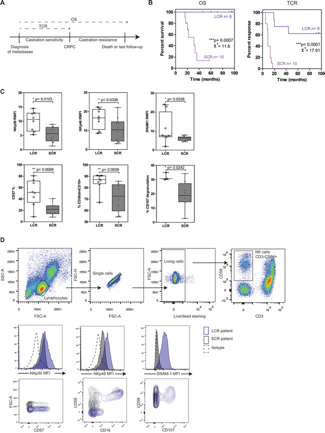 NK cells from mPC patients with longer survival and response to castration have strong cytotoxic potential.