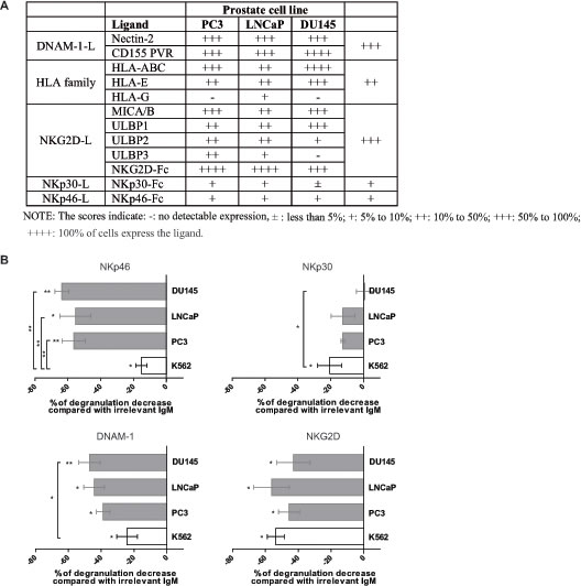 Receptors involved in human prostate cancer cell recognition by NK cells.
