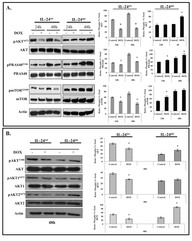 IL-24wt, but not IL-24mt, inhibits the AKT-mTOR signaling pathway.