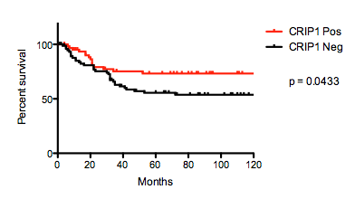 Kaplan-Meier curves comparing 10-year survival of osteosarcomas with and without CRIP1 expression.