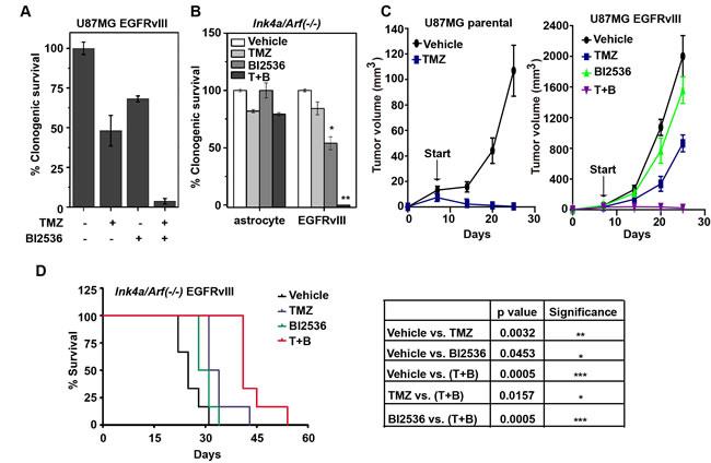 BI2536 augments the tumoricidal effect of TMZ