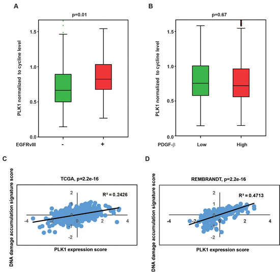 Clinical relevance of PLK1 level with EGFRvIII state and DNA damage accumulation signature.