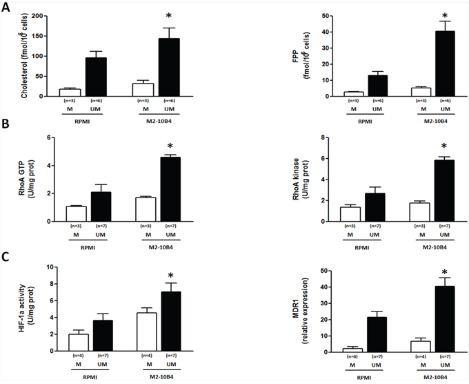 SCs upregulate the Mev pathway activity, the RhoA/RhoA kinase cascade and the HIF-1α/Pgp axis in IGHV UM but not in IGHV M CLL cells.