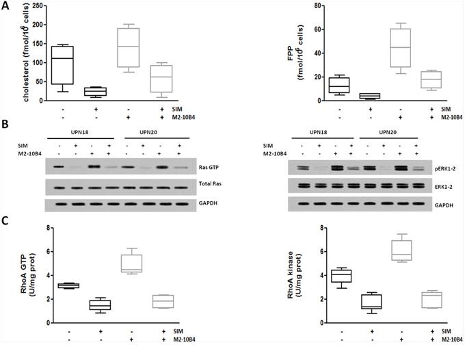 SIM-mediated inhibition of Ras/ERK1–2 and RhoA/RhoA kinase signaling pathways.
